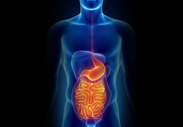 Digestive Health & Detoxification